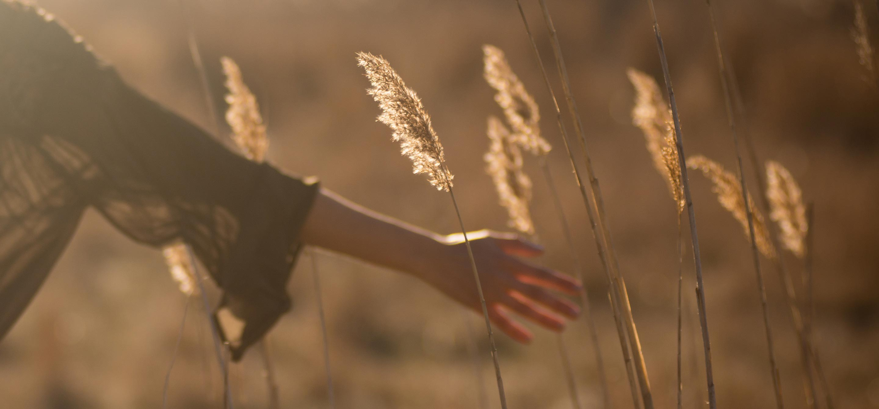 A person's hand passing through a field of wheat