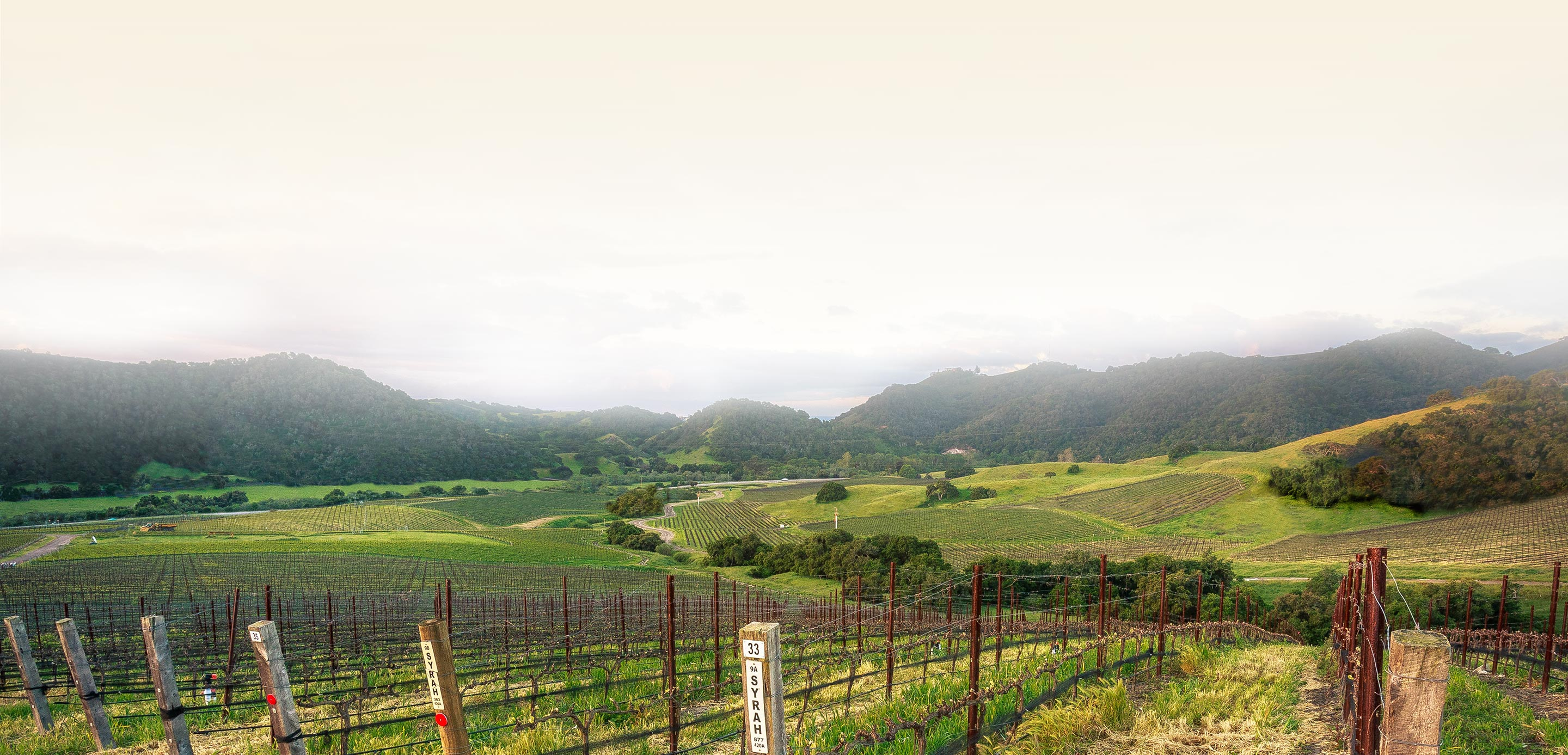 Panoramic view of vineyards, hills, and mountains